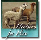 Herdsires for Hire